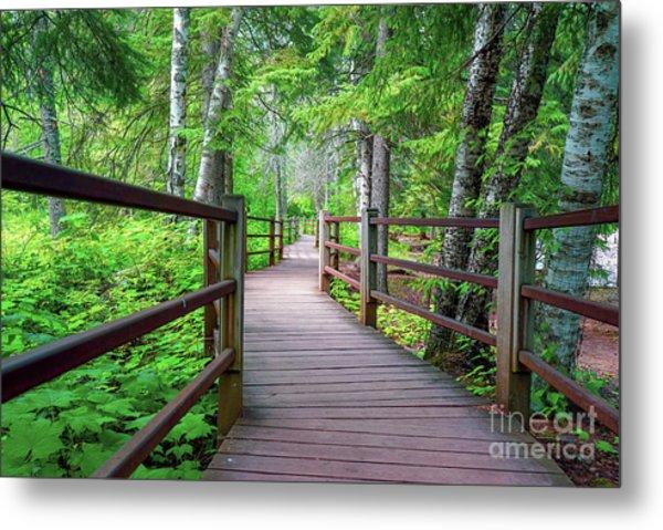 Trail At Gooseberry Falls Metal Print