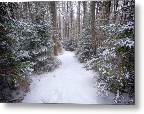 Trail Through The Snowy Forest Metal Print