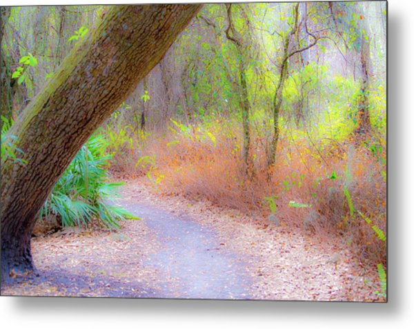 Traveled Paths Metal Print