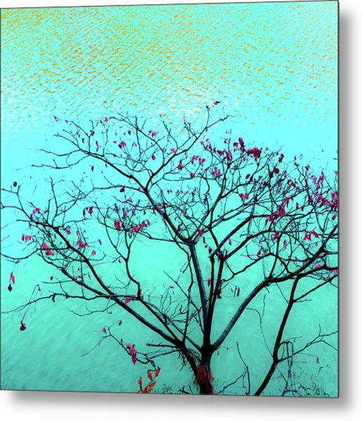 Tree And Water 1 Metal Print