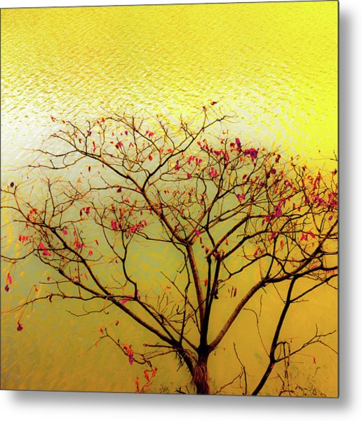 Tree And Water 2 Metal Print