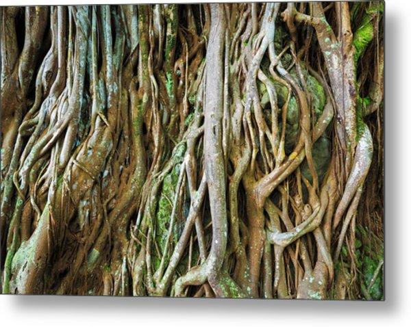 Tree Roots, Onomea Bay, Hamakua Coast Metal Print by Russ Bishop