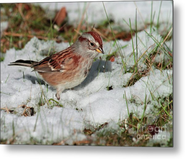 Tree Sparrow In Snow Metal Print