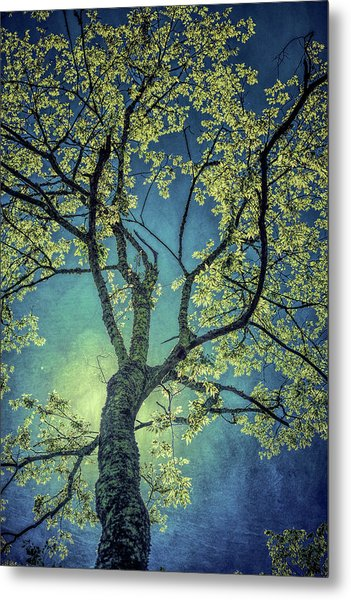 Metal Print featuring the photograph Tree Tops 0945 by Donald Brown