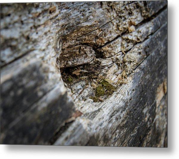 Tree Wood Metal Print