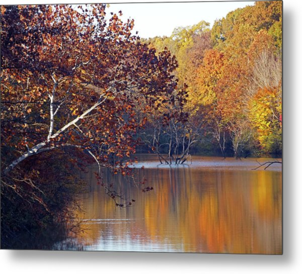 Metal Print featuring the photograph Trees At The Water's Edge by Mike Murdock