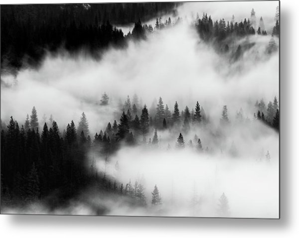 Metal Print featuring the photograph Trees In The Mist 1 by Stephen Holst
