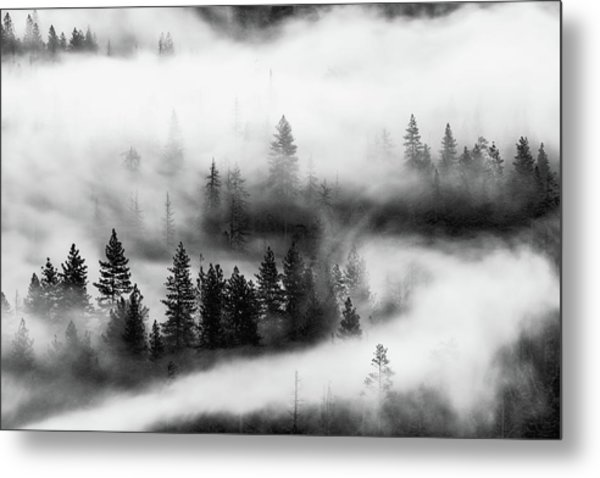 Metal Print featuring the photograph Trees In The Mist 2 by Stephen Holst