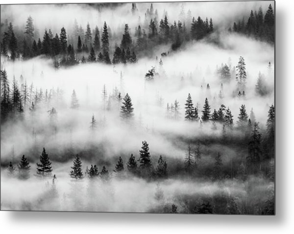 Metal Print featuring the photograph Trees In The Mist 3 by Stephen Holst