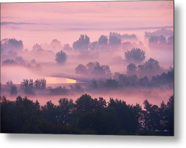 Metal Print featuring the photograph Trees In The Mist by Whitney Goodey