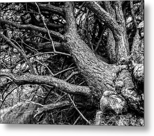 Metal Print featuring the photograph Trees, Leaning by Edward Lee