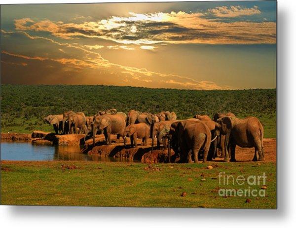 Troop, Herd Of Elephant, Loxodonta Metal Print