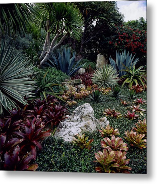 Tropical Garden, West Palm Beach, Fl Metal Print