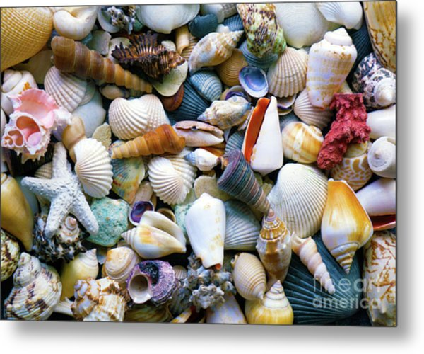 Metal Print featuring the photograph Tropical Treasure Seashells A91218 by Mas Art Studio