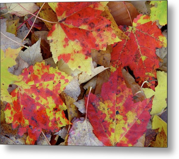 True Autumn Colors Metal Print