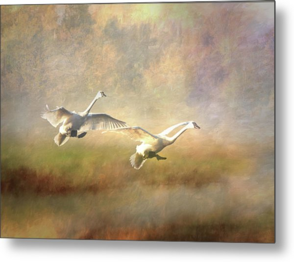 Metal Print featuring the photograph Trumpeter Swan Landing - Painterly by Patti Deters