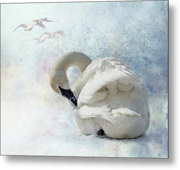 Metal Print featuring the photograph Trumpeter Textures #2 - Swan Preening by Patti Deters