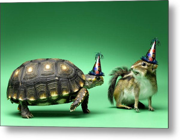 Turtle And Chipmunk Wearing Party Hats Metal Print by Jeffrey Hamilton