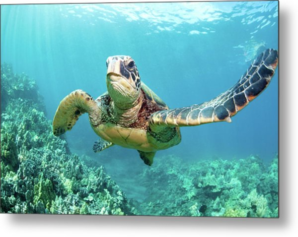 Turtle Metal Print by M Swiet Productions