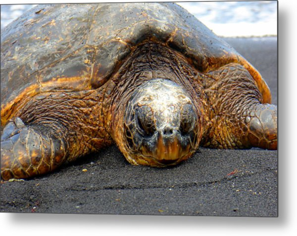 Turtle Rest Stop Metal Print
