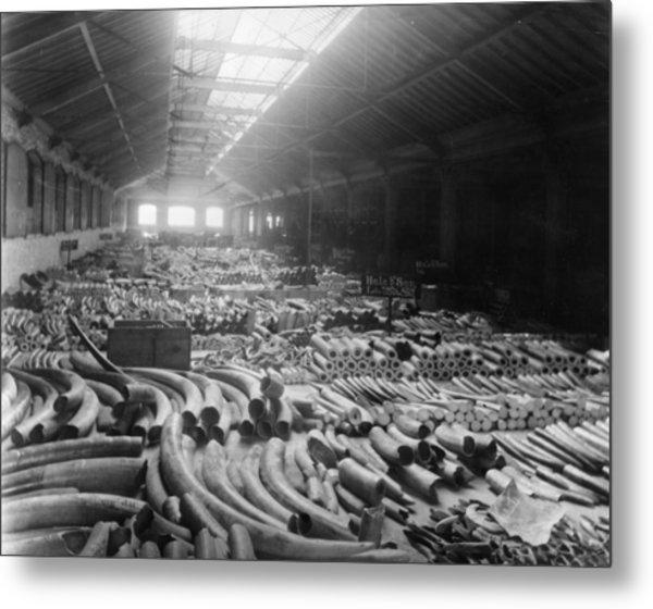 Tusk Warehouse Metal Print by Hulton Archive