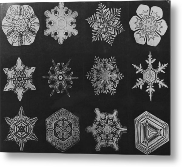 Twelve Snow Crystals Metal Print by Herbert