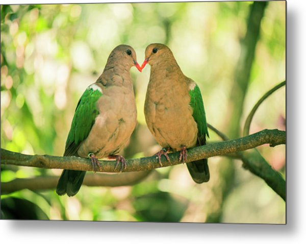 Two Colourful Doves Resting Outside On A Branch. Metal Print