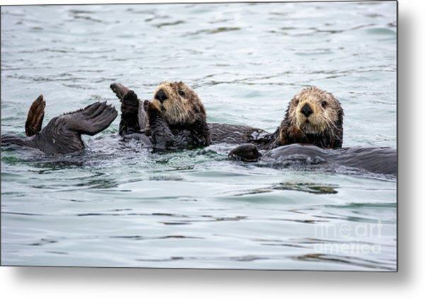Two Cute Sea Otters Grooming Metal Print