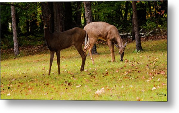 Two Of A Kind Metal Print