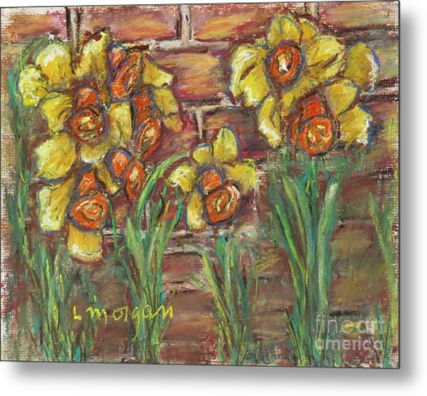 Two Toned Daffodils Metal Print