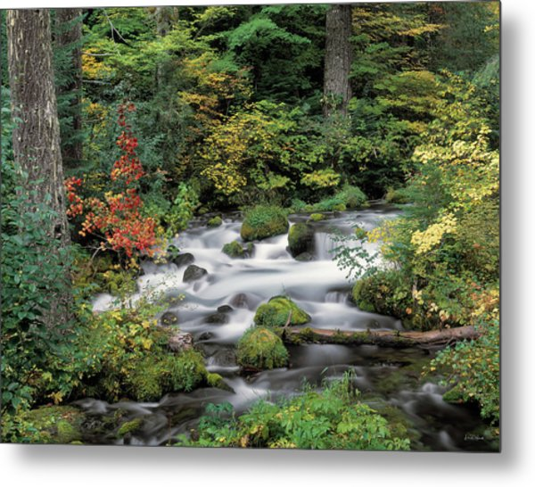 Upper Willamette River Metal Print by Leland D Howard