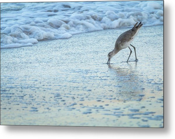Usa, Florida A Willet Digs In The Sand Metal Print by Margaret Gaines