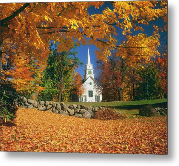 Usa, New Hampshire, Sugar Maples Acer Metal Print