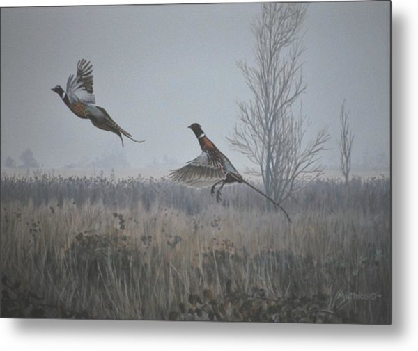 Valley Pheasants Metal Print