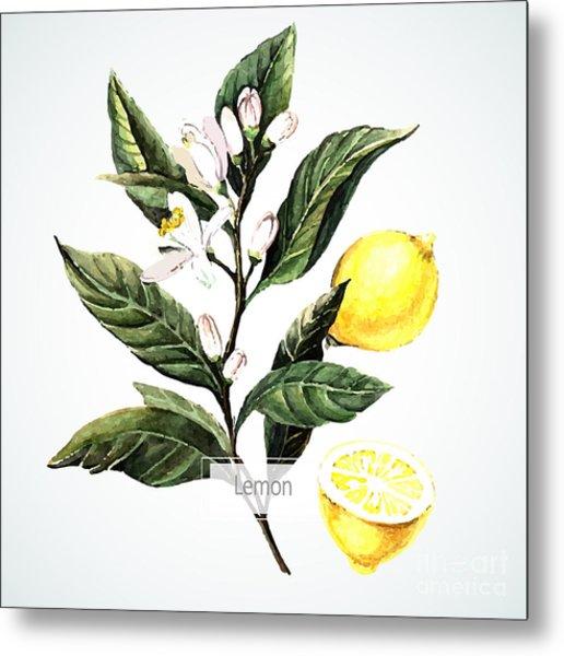 Vector Watecolor Lemon. Botanical Metal Print