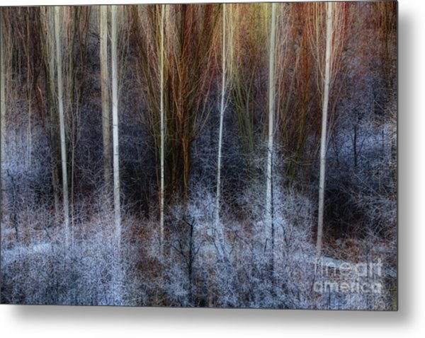 Veins Of Forest Metal Print