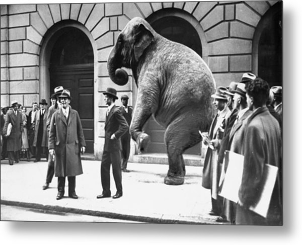 Victory, The G.o.p. Elephant, Stands In Metal Print by New York Daily News Archive