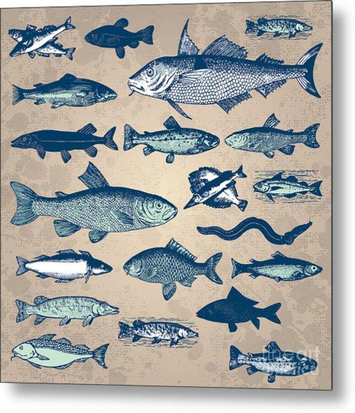 Vintage Fish Drawings Set, Vector Metal Print