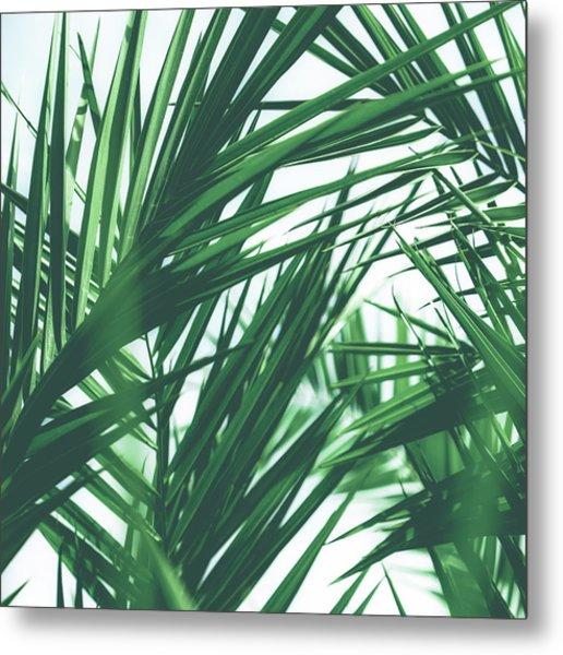 Vintage Palms IIi Metal Print