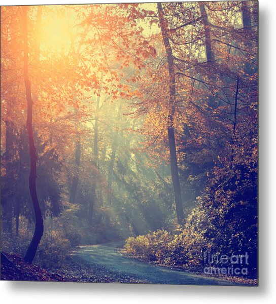 Vintage Photo Of Autumn Forest Metal Print
