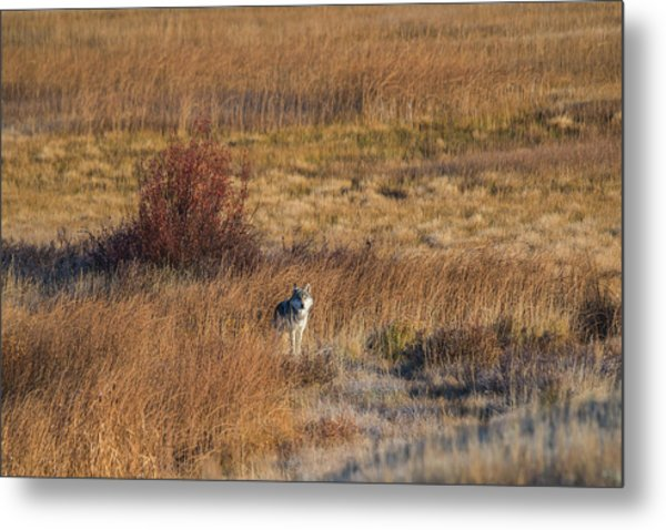 Metal Print featuring the photograph W2 by Joshua Able's Wildlife