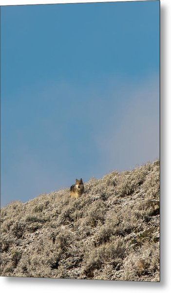 Metal Print featuring the photograph W24 by Joshua Able's Wildlife