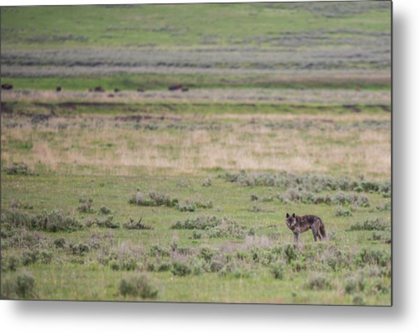 Metal Print featuring the photograph W26 by Joshua Able's Wildlife