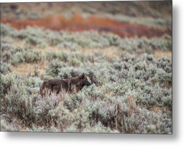 Metal Print featuring the photograph W30 by Joshua Able's Wildlife