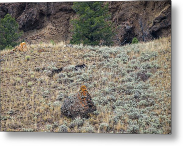 Metal Print featuring the photograph W32 by Joshua Able's Wildlife