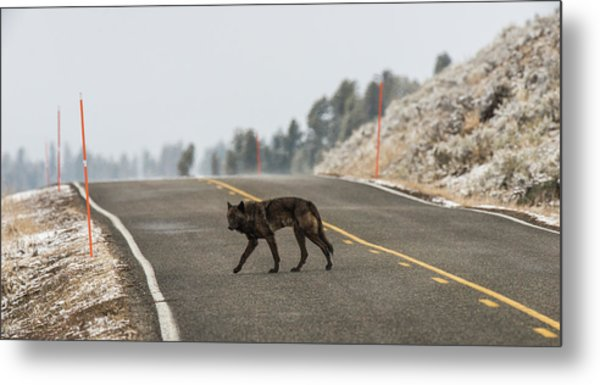 Metal Print featuring the photograph W55 by Joshua Able's Wildlife