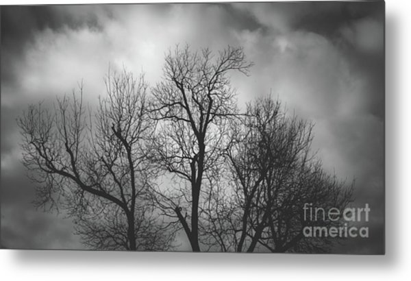 Waiting Bird Metal Print