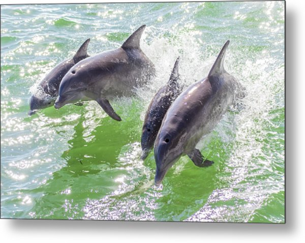 Wake Surfing Dolphin Family Metal Print