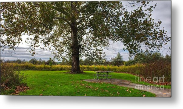 Walnut Woods Tree - 1 Metal Print