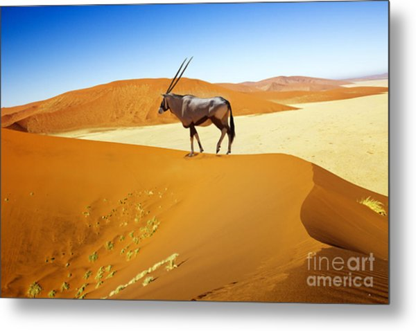 Wandering Dune Of Sossuvlei In Namibia Metal Print